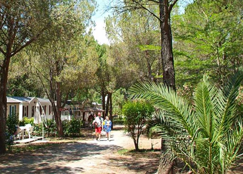 Camping-La-Baume-La-Palmeraie-Frejus-Var