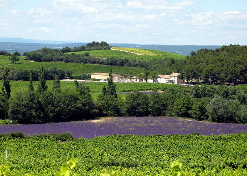 Domaine des Lauribert-Vignobles