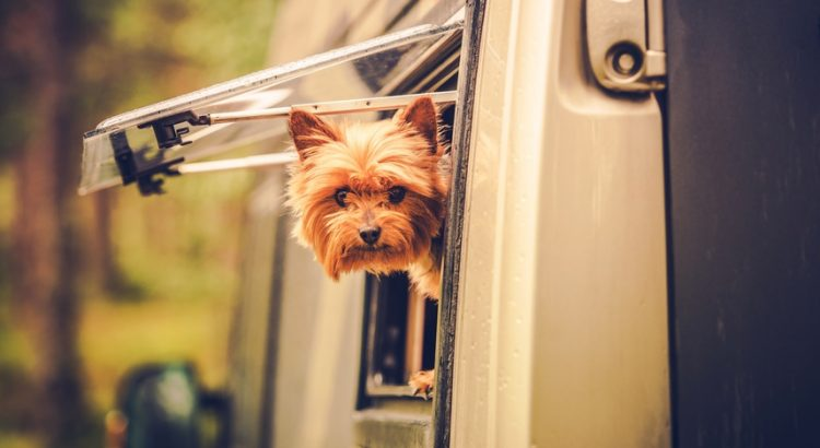 Campings-acceptent-animaux