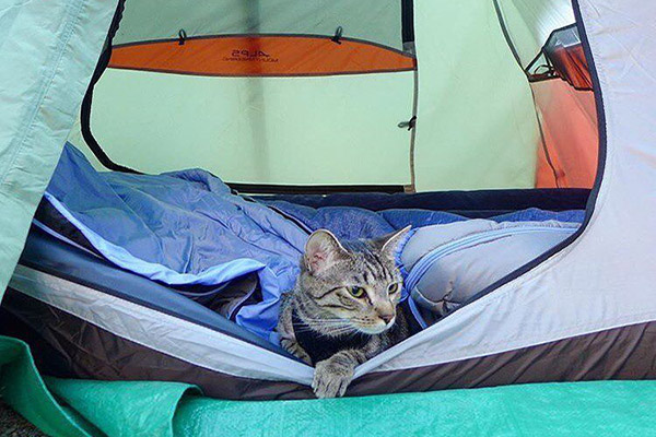 Campings Acceptent Animaux Compagnie_Chat