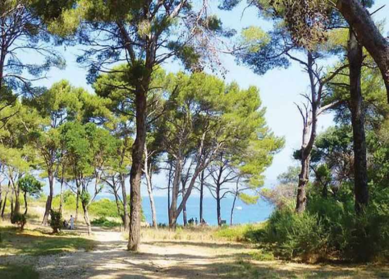 La Presqu ile de Giens Campsite-Pitches with sea view